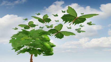 Leadership - Transformation – The Technical Choice